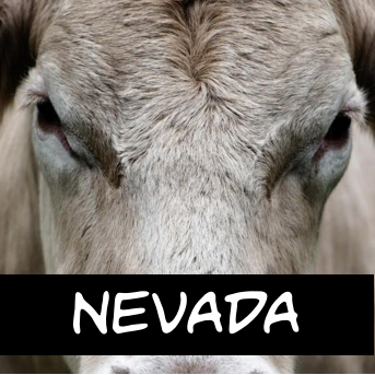 nevada (needs an icon)